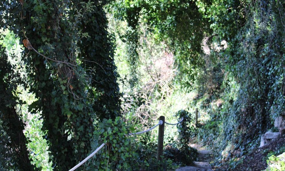 bosque_las_chorreras
